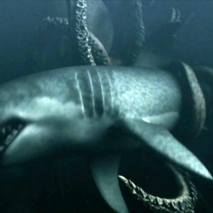 Saturday is Sharkday #15: Mega Shark versus Giant Octopus