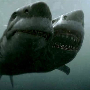 Saturday is Sharkday #21: 2-Headed Shark Attack